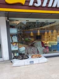 Stray dogs sleep on mattress outside furniture store