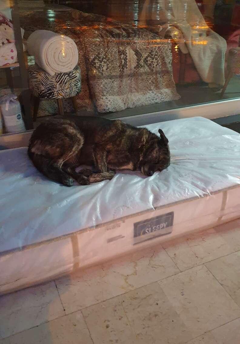 Stray dog sleeps on mattress outside