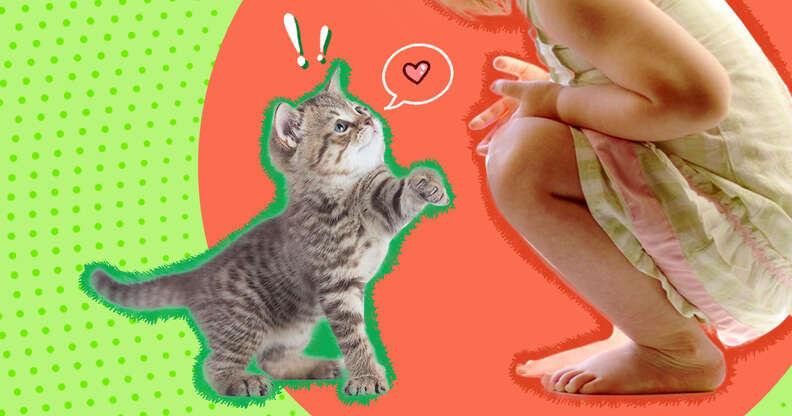 kitten meeting a kid