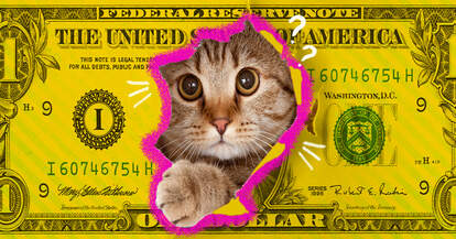 cat on a dollar bill