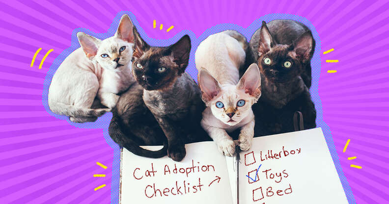 checklist for adopting cats