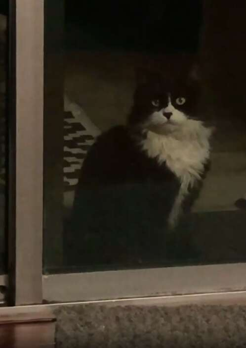 Cat shows up in woman's backyard asking to be let in