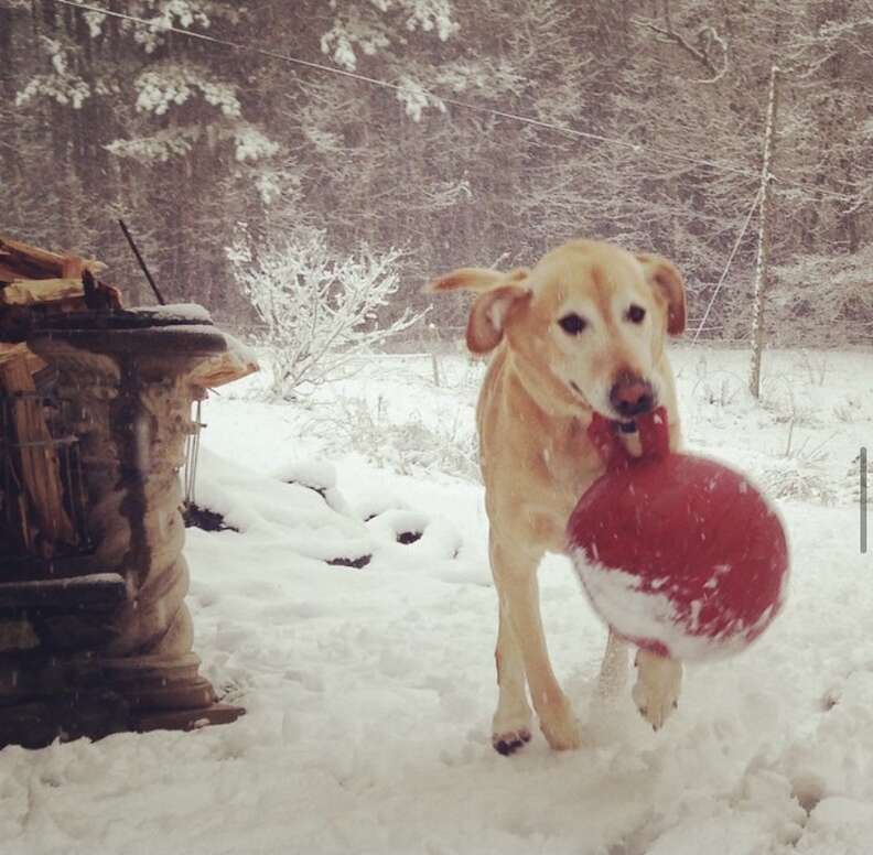 dog plays in snow