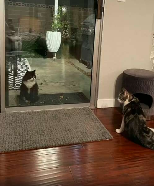 Stray cat wants to play with inside kittens