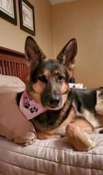 Shelter dog saved man's life during stroke.