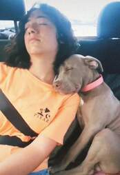 Dog falls asleep in backseat of car with his sister