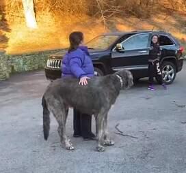 Woman reunites with dog after car crash