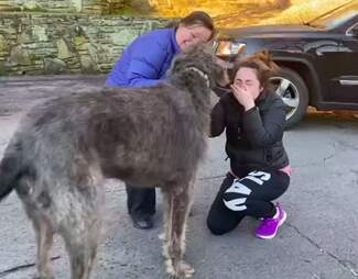 Woman cries when reunited with lost dog