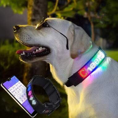 LED Collar With A Customizable Display