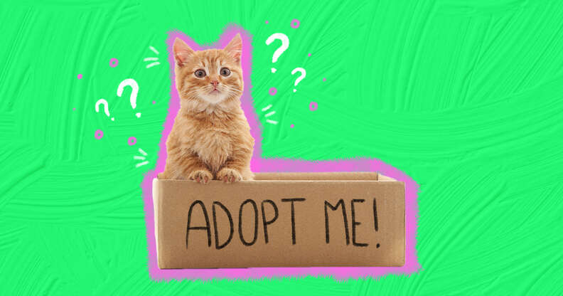 what is a rescue cat