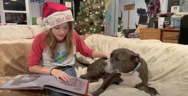 dog gets a bedtime story