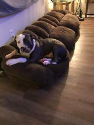 dog on couch