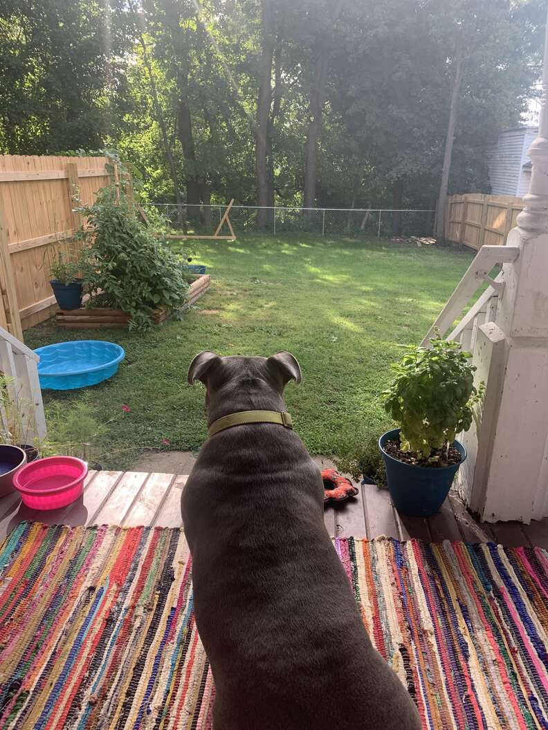 dog looks out at yard