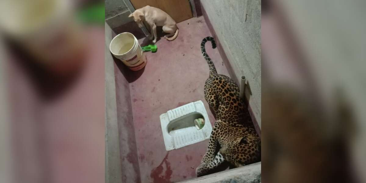 Dog And Leopard Get Stuck In Bathroom Together For 7 Hours - The Dodo