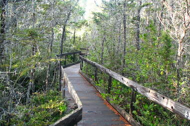 Boardwalk path through the Pygmy forest, Van Damme State Park