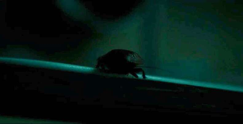 saint maud cockroach