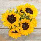 Sunflowers with Goldenrod Accents