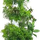 Aerospring Hydroponic Tower - Vertical Herb & Vegetable Garden