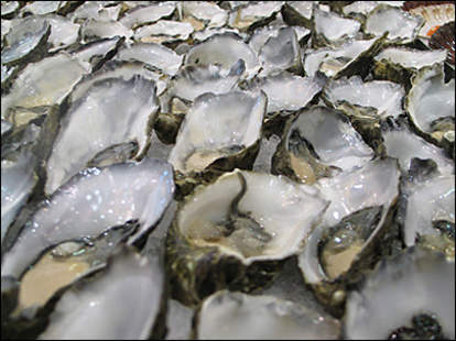 A close up of many oysters.