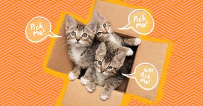 how to pick the right kitten for you