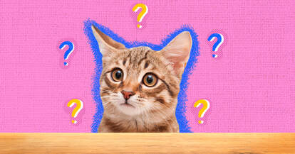 questions to ask when adopting a cat