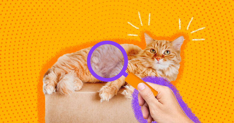 what to look for when adopting a cat