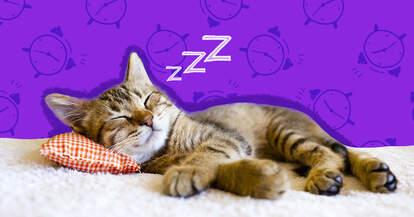 how long do kittens sleep