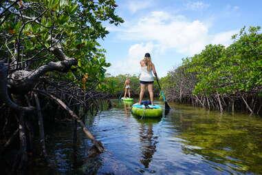 paddleboarding through mangroves in Biscayne National Park