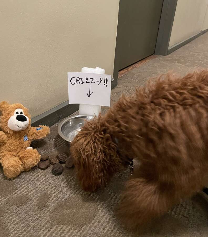 Grizzly the dog finds a present left by his secret admirer