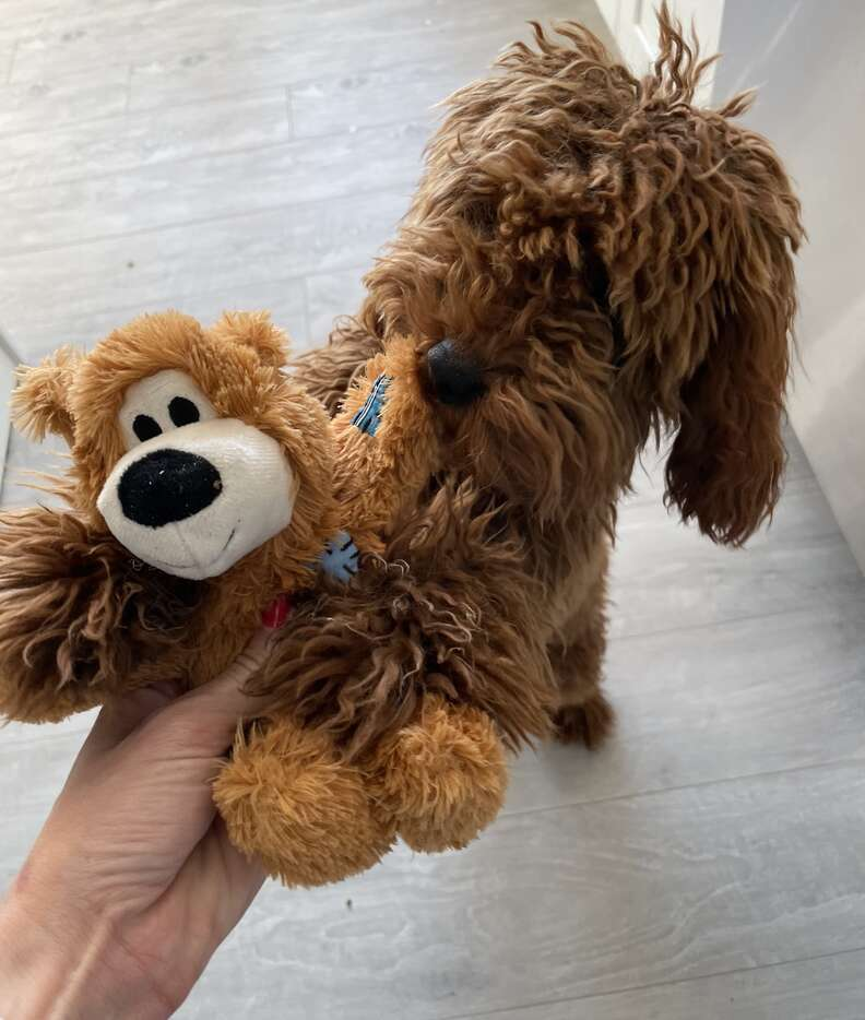 Dog gets a special toy from his secret admirer