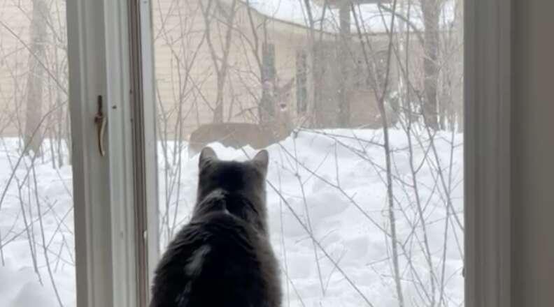 cat and deer