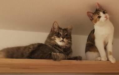 Cats Koda and Lilly make an optical illusion
