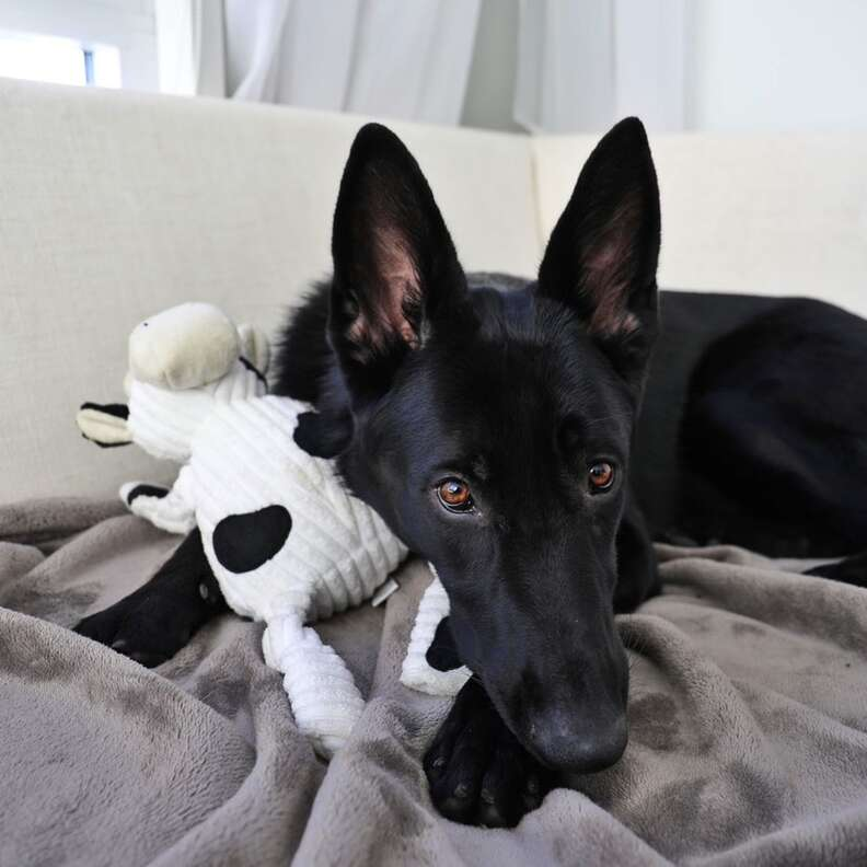 dog and her toy