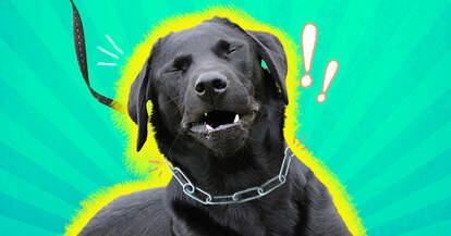 dog choke collars