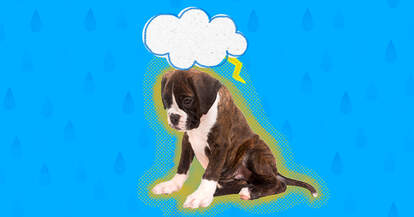 depressed dog with cloud over his head