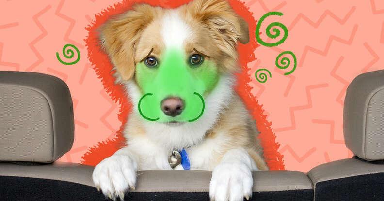 dog car sickness