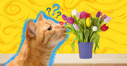 flowers poisonous to cats