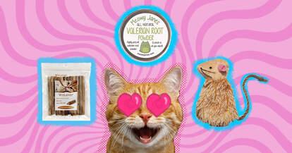 cat loves catnip