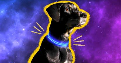 Light-up dog collar