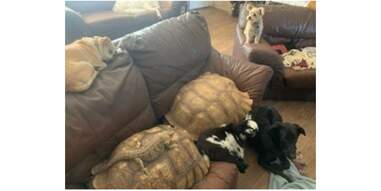 Animals huddled together on a couch