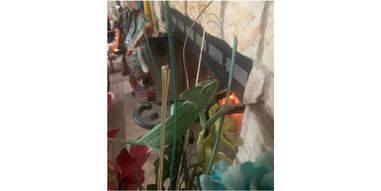 chameleon blending into houseplant