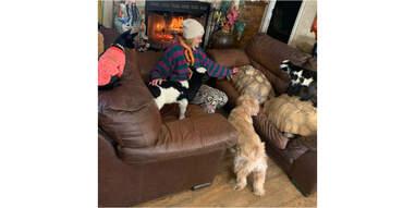 animals huddled together indoors