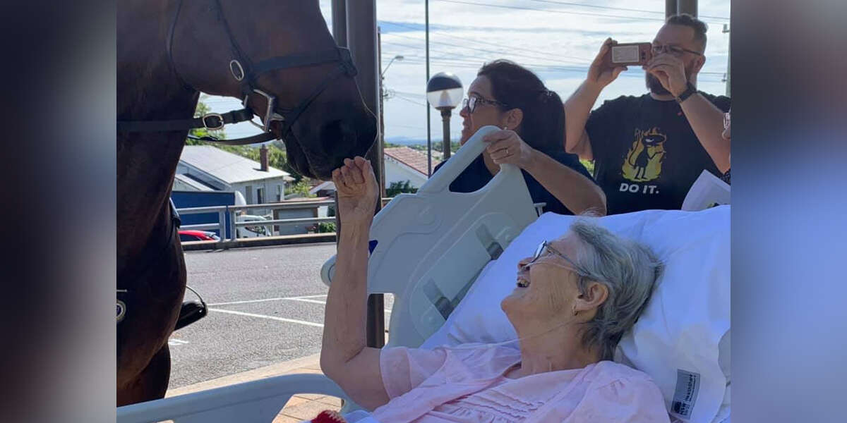 Woman Who Loves Horses Gets The Sweetest Surprise In Her Final Days