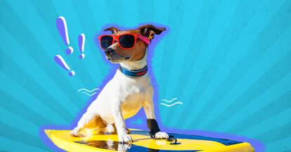 Dog on surfboard