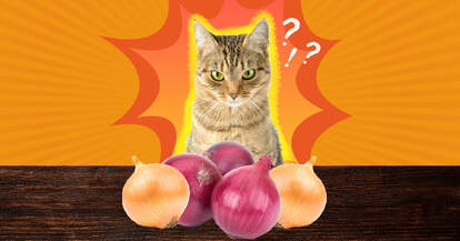 cat and onions