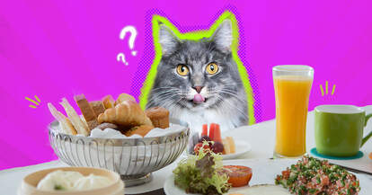 cat with human food
