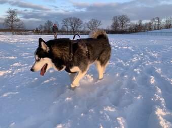 nieve ronca