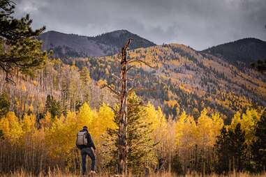 a hiker in a mountainous forest