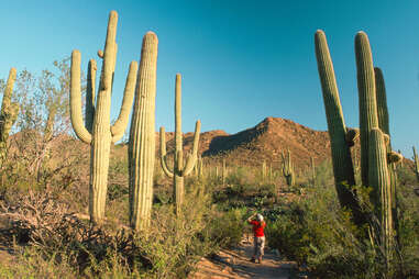 a person photographing an enormous cacti