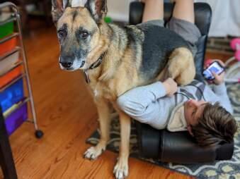 dog sitting on kid